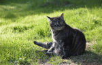 Какой корм лучше для кошек акана или ориджен