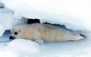 Чем отличается северный полюс от южного — особенности и отличия