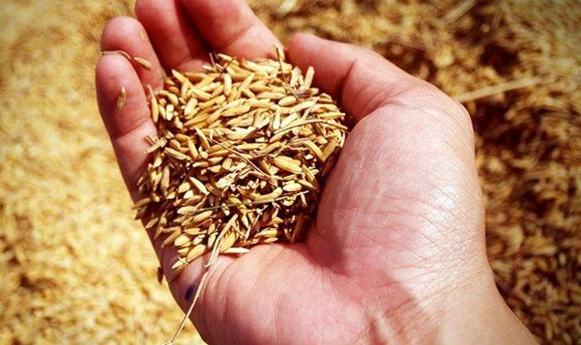 В чем разница между пропаренным и обычным рисом