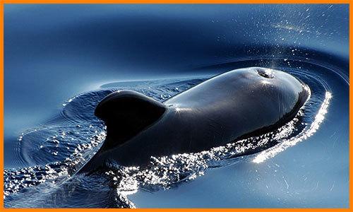 Чем кит отличается от дельфина?