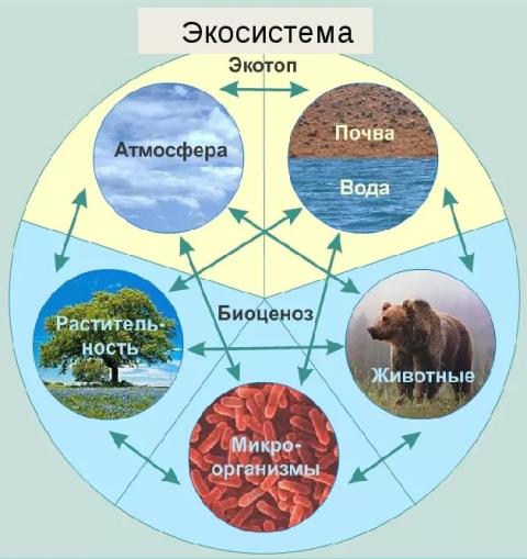 Чем биогеоценоз отличается от экосистемы