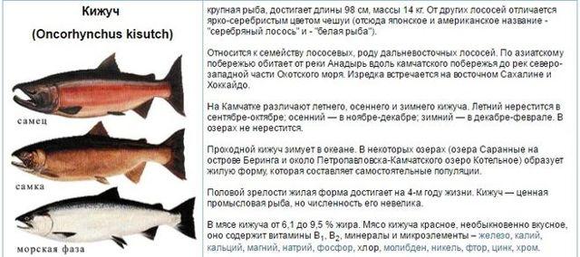 Чем кета отличается от семги: особенности и различия