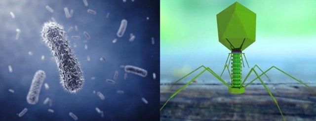 Бактерии и простейшие — в чём их сходство и отличие?