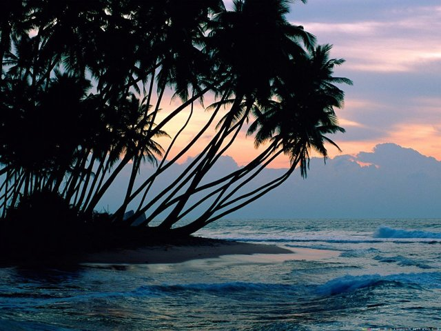 Где лучше отдохнуть на ГОА или Шри-Ланке?