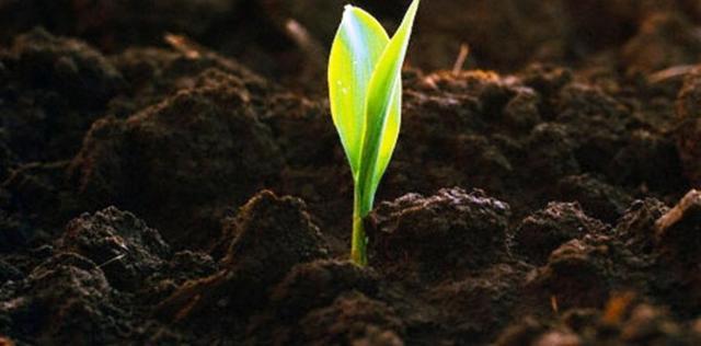 Грунт и почва — чем они отличаются